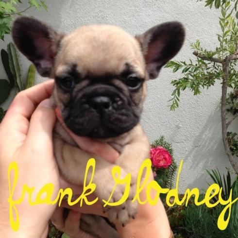Frank Glodney
