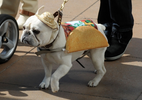 Mario Lopez dresses his dog up as a 'Taco' for Halloween! LA