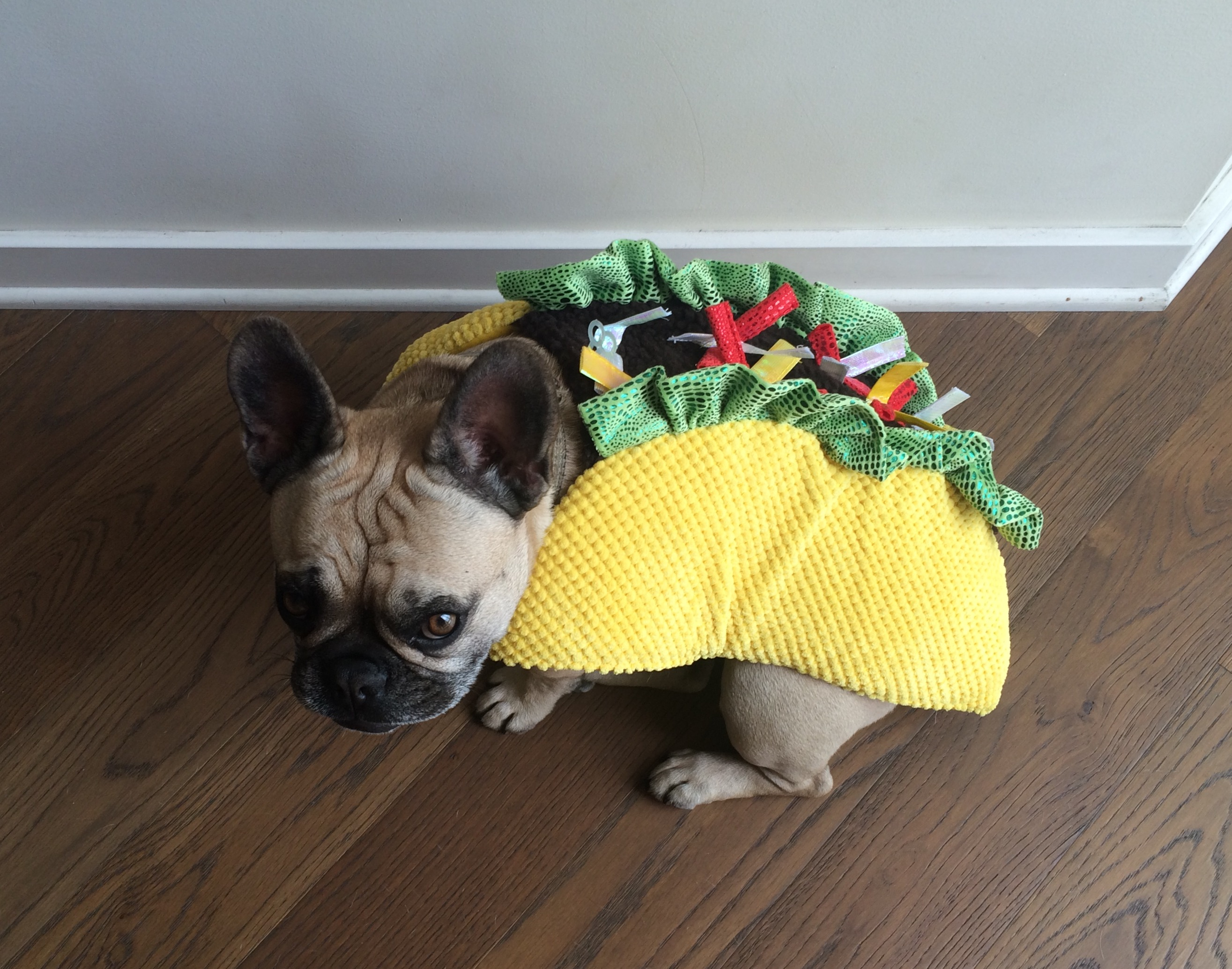 Collection French Bulldog Halloween Costume Pictures. french ...